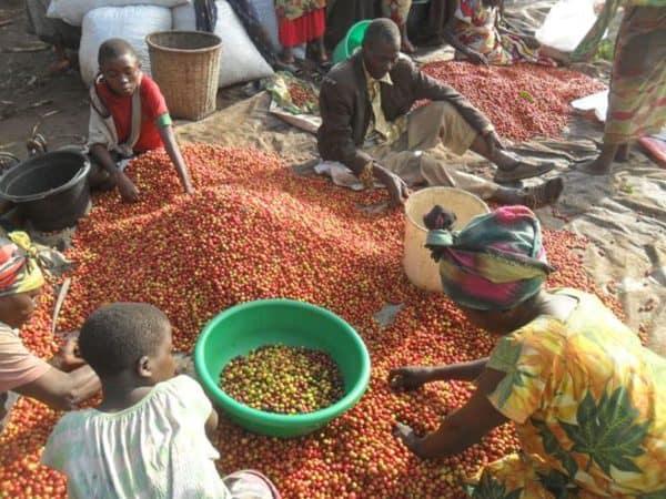 DR Congo Karango -