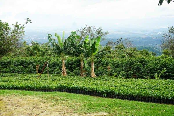 Costa Rica La Perla Del Café -