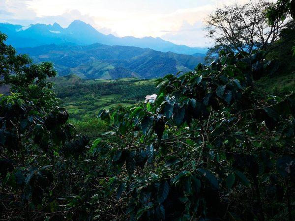 Colombia Finca El Encanto -