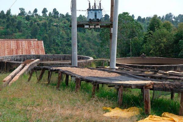 Kenya AA Kiganjo -